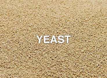 Ingredients_Yeast